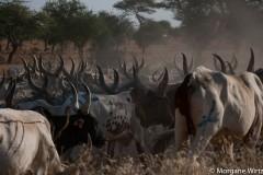 Diffa, à l'est du Niger est une zone propice à l'agriculture, à la pêche, à l'élevage et au commerce. Aujourd'hui, menacée par Boko Haram, la région est placée sous état d'urgence.
