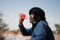 Dans les territoires libérés, sur le territoire du Sahara Occidental occupé par les Sahraouis, Lud s'abreuve à l'eau d'une oasis. Par chance, il a plu hier soir.