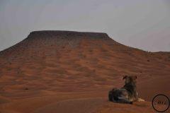 Un matin après la pluie, dans le Sahara, 2012.