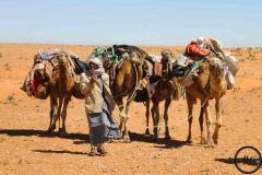 Peuple nomade dans le Sahara, 2012.